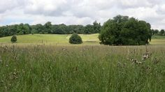 Wimpole National Trust, by Julie Sant 31.07.16