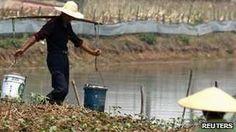 Farmers in Wanghu village, Hubei province