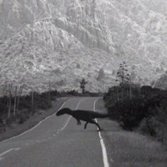 Mysterious, Unidentified Creature runs across road. it  looks like a predator dinosaur. Authenticity to confirm. Mulder