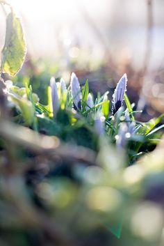 Bratte bakka og grøne lier: No livnar det i lundar