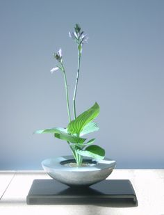 Nihon No Bunkasai (Japanese Culture): Ikebana
