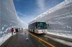 Neve russo Debu grande, a soli 20 metri! Una vita rara!