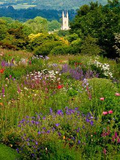 Garden Designs Ideas 2018 : Meadow flowers at Buckland Abbey Monachorum Yelverton Devon Meadow Flowers, Wild Flowers, Flowers Garden, English Country Gardens, British Countryside, Belleza Natural, Plein Air, Garden Inspiration, Travel Inspiration