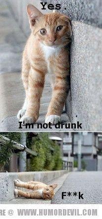 Funny pic. Cute cat.