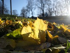 Autumn in Sweden - Perspective Sweden, Perspective, Leaves, Autumn, Texture, Spring, Flowers, Fall, Perspective Photography