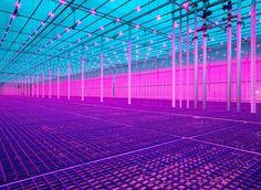 Future Vision - INT07 Foodtopia - Rob Baan / Food Inspiration