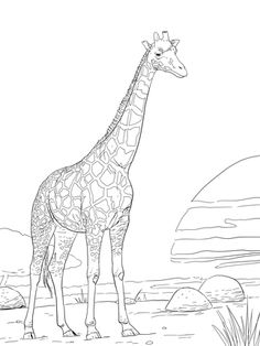 Rothschild Giraffe Coloring Page