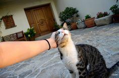 Mr. J.Fox is a litlle bit cuddly... #Cat #kitty