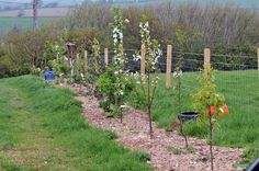 Hedgerow fruit trees: Spring planting of young fruit trees. Hedgerow fruit t Permaculture Design, Plant Information, Spring Plants, Different Plants, Farm Gardens, Native Plants, Fruit Trees, Sustainable Living, Gardens