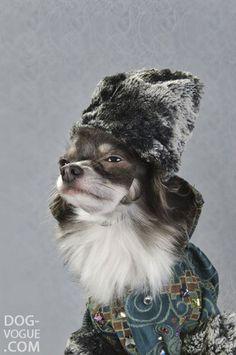 High fashion dog models photographer Sophie Gamand