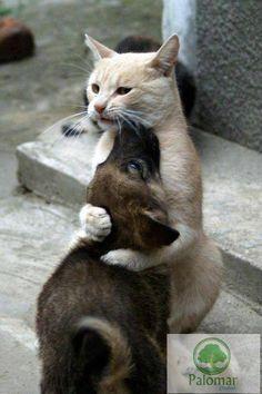Abraza a los seres queridos. Aunque seamos diferentes TODOS NECESITAMOS UN ABRAZO. #CiudadPalomar