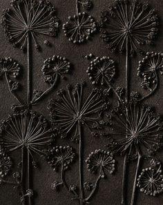 blossfeldt photography - Google Search