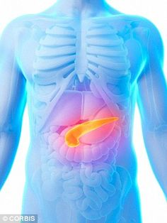 The researchers found the treatment 'rewired' the bodies of diabetic rats, shifting control of blood sugar levels from the pancreas, highlighted, to the upper intestine