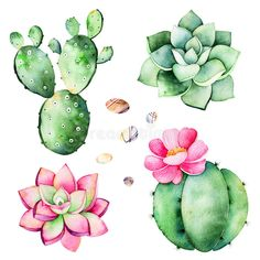 Watercolor collection with succulents plants,pebble stones,cactus.Handpainted iclipart isolated on white background.World of succulent and cactus collction.Perfect for your unique design,logo,patterns Royalty free image illustration Watercolor Succulents, Watercolor Cactus, Watercolor Images, Watercolor Paintings, Succulents Painting, Succulents Drawing, Watercolor Background, Watercolour, Cactus Drawing
