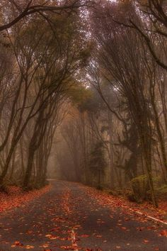 Dark Highway, Tacoma, Washington photo via coala Tacoma Washington, Washington State, Places To Travel, Places To See, Surf, Evergreen State, Future Travel, Pacific Northwest, The Great Outdoors