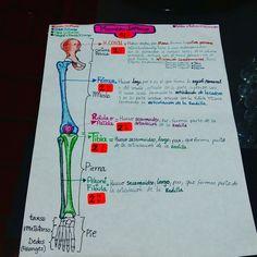 29 mejores imágenes de Huesos de la cadera  9ae3666e137b