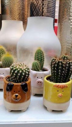 #cactus #video #florariamagnolia Magnolia, Cactus, Planter Pots, Magnolias
