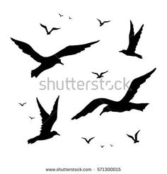 Image result for seagull vector birds