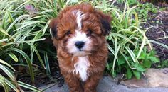 These 6 Adorable Dogs Look Just Like Teddy Bears | CANIDAE® Blog