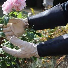These superb British-made thorn resistant leather gauntlet  gloves are a 'must have' item when working near  brambles or nettles and were highly recommended in both Garden Answers and Telegraph Gardening
