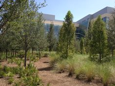 Nemours Children's Hospital - Planted forest at Discovery Garden.
