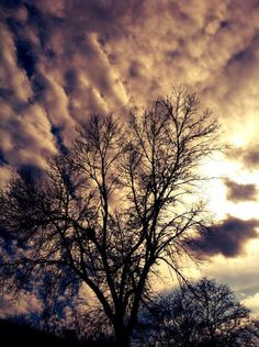 #tree #clouds