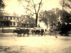 OLD JACKSONVILLE   Alabama Pines   JASON ISBELL