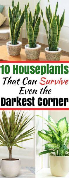 Houseplants That Can Survive in Even the Darkest Corner