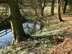 A tree grows aslant a brook