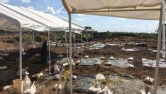 Cemetery found at Texas construction site probably held black people forced into labor - CNN