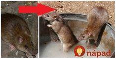 Ak máte problém s myšami a potkanmi u vás doma, tento nápad si pozrite!