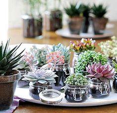 Succulentes sur un plateau