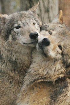 Los animales también demuestran sentimientos