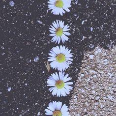 ... o desabrochar da vida apesar de todas as adversidades, isso é MILAGRE!!! (lígia guerra)