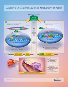 Mechanism of action of viagra