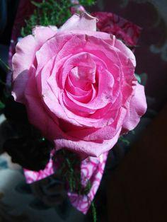 #Pink; #rose; #flower :))