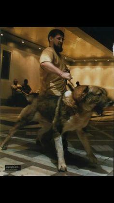 Checenian president and his Alabai dog