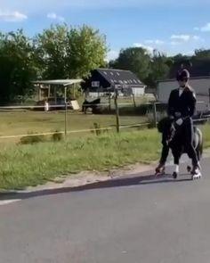 Funny Horse Videos, Funny Horses, Cute Horses, Pretty Horses, Horse Love, Funny Animal Videos, Funny Animal Jokes, Cute Funny Animals, Most Beautiful Horses