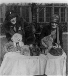 Washington cat show opens at Wardman Park Hotel 1927  Edna B. Doughty and Louisa Grogen with some of the beautiful cats entered in the show.