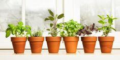 10 idee per coltivare l�orto in spazi ristretti