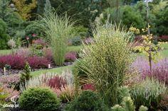 kompozycje traw ozdobnych w ogrodzie - Szukaj w Google