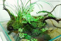Posts about aquarium written by Querencia Planted Aquarium, Aquarium Terrarium, Aquatic Plants, Air Plants, Indoor Plants, Ikebana, Bonsai, Indoor Water Garden, Indoor Pond