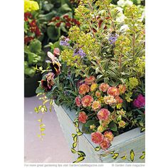 Spring combo | Get tons of instant impact with this bright, fragrant combo  Pansy Viola Delta™ Tapestry Mix, Vinca Vinca minor 'Illumination', Dianthus Dianthus Early Bird™ Sherbet, Primrose Primula Belarina® Rosette Nectarine, Wallflower Erysimum Poem Lavender, Euphorbia Euphorbia x martini 'Ascot Rainbow'