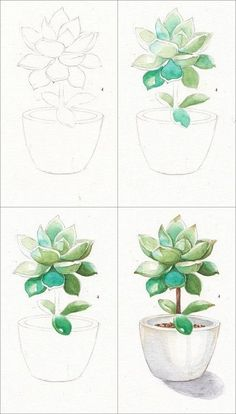 ▷ beautiful drawing ideas with detailed instructions - Learn to draw a . - ▷ beautiful drawing ideas with detailed instructions – Learn to draw a plant in a flowerpot, instructions in four steps, learn to draw step by step – Watercolor Drawing, Watercolor Flowers, Painting & Drawing, Watercolor Ideas, Watercolor Succulents, Watercolor Water, Painting Steps, Succulents Art, Simple Watercolor