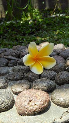 The beauty flower 🌸