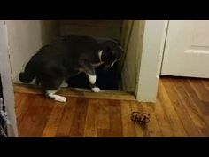 Just A Bunch Of Scaredy Cats! - YouTube
