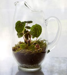 21-DIY-Terrarium-using-a-glass-pitcher-from-All-Sorts-of-Pretty1
