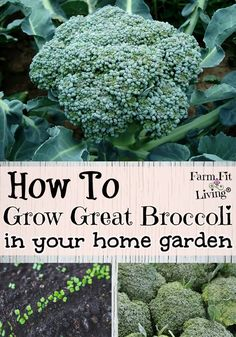 Container Gardening Ideas Are you ready to learn to grow great broccoli to enjoy all year long? Here's all the best tips and tricks for growing and preserving amazing nutritious broccoli.