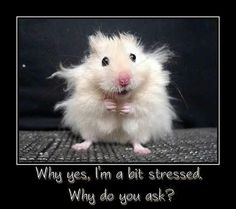 Tips on how to feel less stressed.. from a hamster? - Some great tips!