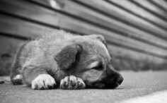 NORVEGIA, IN ARRIVO UNITA' SPECIALI DI POLIZIA ANTI-ABUSI SUGLI ANIMALI » Fbsocialpet.com: il social forum per cani, gatti, cavalli, tutti gli animali